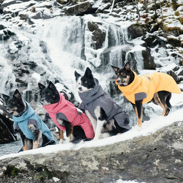 dogs-sporting-expedition-parkas