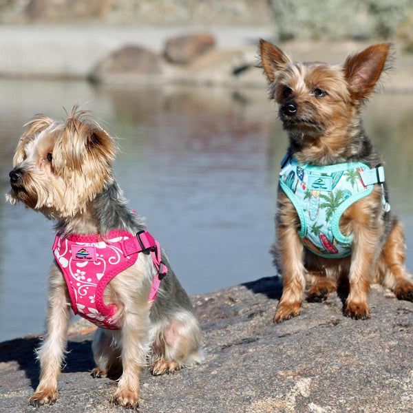 dogs-wear-wrap-and-snap-choke-free-dog-harnesses