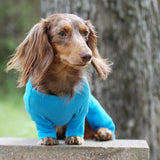 long-haired-dachshund-models-blue-sweet-dreams-dog-pajamas
