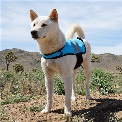 Blue Cooling Safety Vest - UKUSCAdoggie