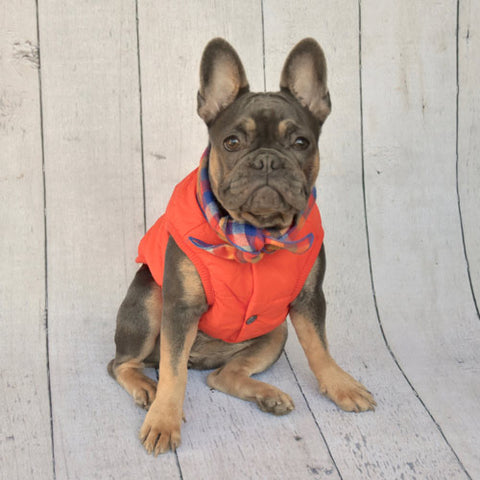 Orange Baxter Bandana Puffer Jacket