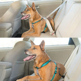 petsafe-3-in-1-harness-used-in-vehicle