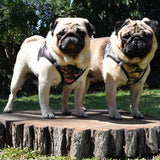 pugs-model-camo-american-river-choke-free-dog-harnesses