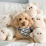 shaggy-sheep-is-a-perfect-snuggle-buddy-for-dogs