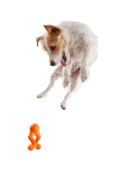 dog-loves-the-unpredictable-tizzi-interactive-toy
