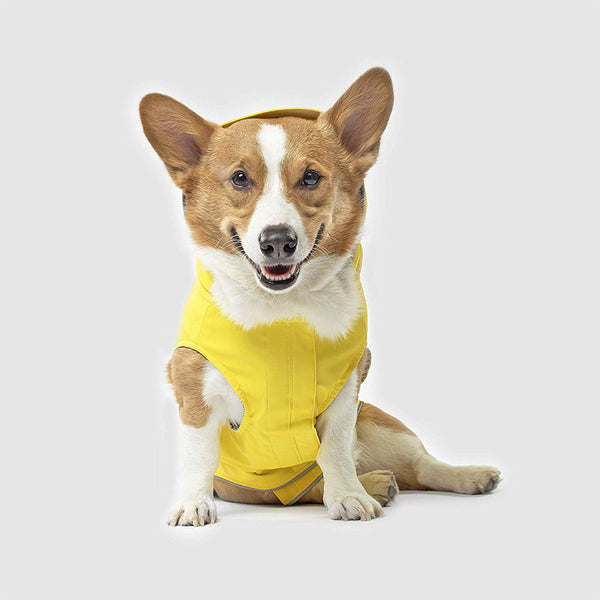 corgi-wears-torrential-tracker-yellow