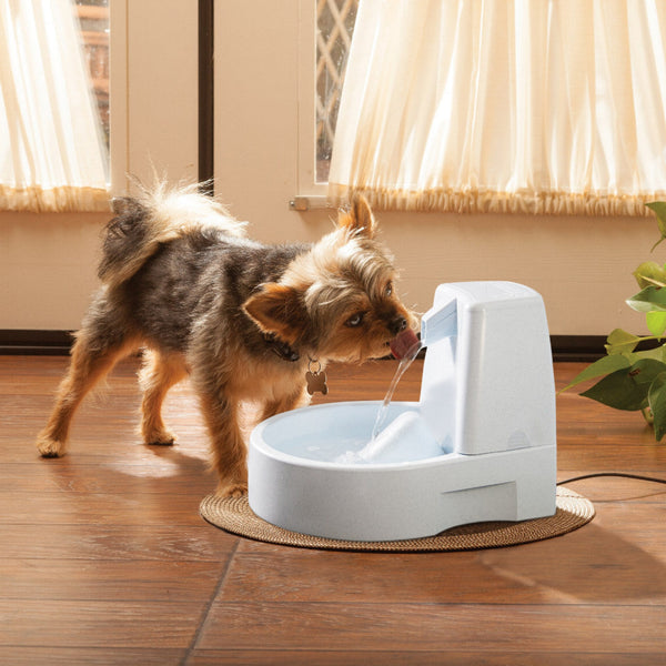 yorkie-drinks-from-drinkwell-original-pet-fountain