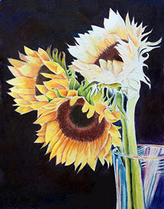 Three Sunflowers - Colored Pencil Artwork by Barbara Goodsitt