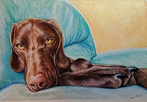 Dog Day Afternoon - Colored Pencil Artwork by Shannon Johnson