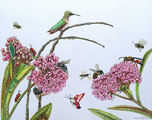 Milkweed Menagerie - Colored Pencil Artwork by Marsha Gilger