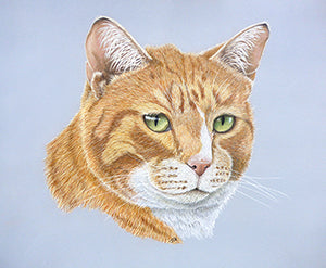 The Mighty Hunter - Colored Pencil Artwork by Jo Goudie