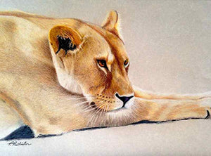Out of Africa - Colored Pencil Artwork by Penny Pallister