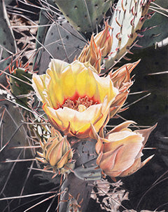 First Bloom - Colored Pencil Artwork by Robin Manelis