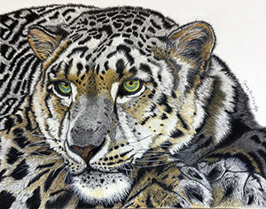 Snow Leopard - Colored Pencil Artwork by Geraldine Buckley