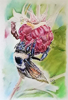Glory Bee - Colored Pencil Artwork by Katie Swain
