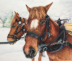 Working Horses of Switzerland - Colored Pencil Artwork by Denise Wilson