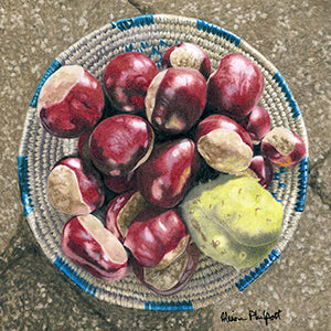 These Old Chestnuts - Colored Pencil Artwork by Alison Philpott