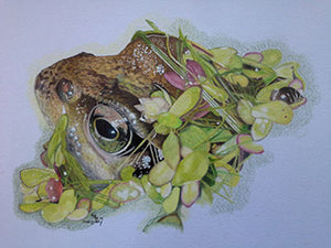 Garden Friend - Colored Pencil Artwork by Eileen Stevens
