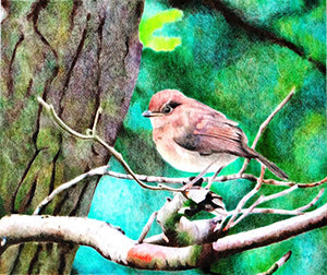 Poor Little Sparrow - Colored Pencil Artwork by Julie Maguire