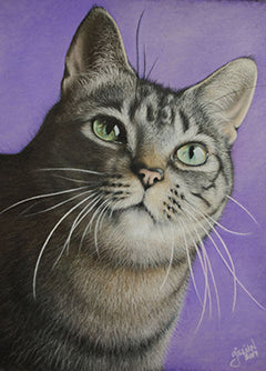 Kiki - Colored Pencil Artwork by Gillian Steenblik