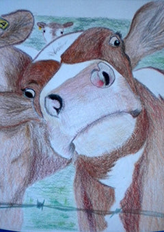 NoOsy Cow - Colored Pencil Artwork by Susan Pernot