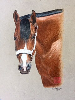 Shirley - Colored Pencil Artwork by Melissa Smith