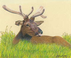 Chillin in the Park - Colored Pencil Artwork by Adare Diers