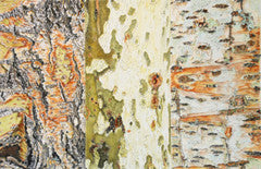 Tree Bark Medley - Colored Pencil Artwork by Andrea Placer