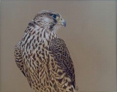 Winged Hunter - Peregrine Falcon - Colored Pencil Artwork by Annette Kirk