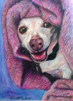 Hide n' Seek with Tony Chihuahua - Colored Pencil Artwork by Carol Mack
