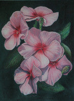 Pink Vinca - Colored Pencil Artwork by Dorris Ellett