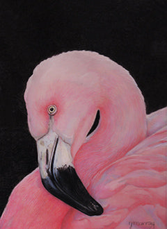 Not Just Pink by Irma Murray