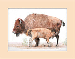 Buffalo Mom - Colored Pencil Artwork by Linda LeBaron