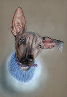 Gladys - Colored Pencil Artwork by Lisa Ann Watkins