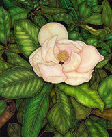 Mama's Magnolia - Colored Pencil Artwork by Lorrie Cerrone