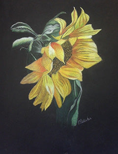 Sunflower on Black Paper by penny pallister
