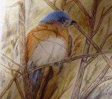 Looking for spring - Colored Pencil Artwork by Rick Causey