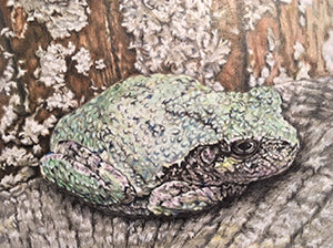 Grey's Tree Frog by Sandy Eppert