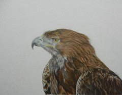 Golden Eagle - Colored Pencil Artwork by Sarah Binns