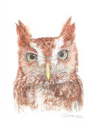 Whooo, Me? - Colored Pencil Artwork by Sue Betanzos