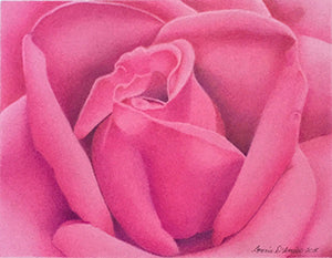 Pink Rose by Connie D'Amico