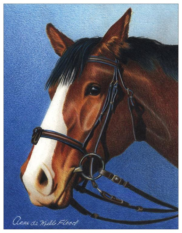 Bay Horse Colored Pencil Project Kit