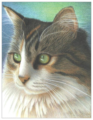 Cat Colored Pencil Project Kit