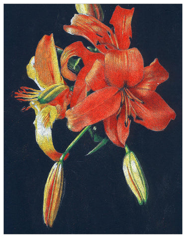 Day Lily Colored Pencil Digital Download Project