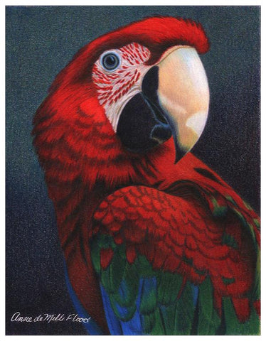 Macaw Colored Pencil Project Kit