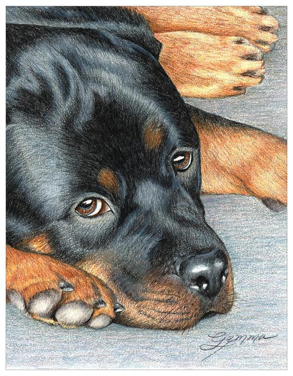 Rottweiler Colored Pencil Project Kit