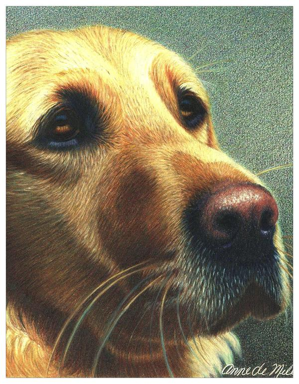 Yellow Lab Colored Pencil Project Kit