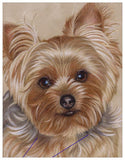 Yorkie Colored Pencil Project Kit