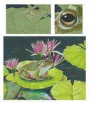 Mark Menendez: Marsh Frog Colored Pencil Tutorial