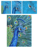 Mark Menendez: Proud Peacock Colored Pencil Tutorial